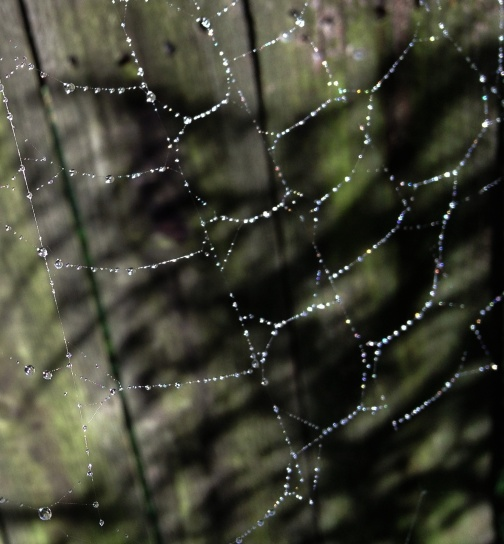 Photo credit to my mom for this shot...morning dewdrops on a spiderweb. So beautiful!